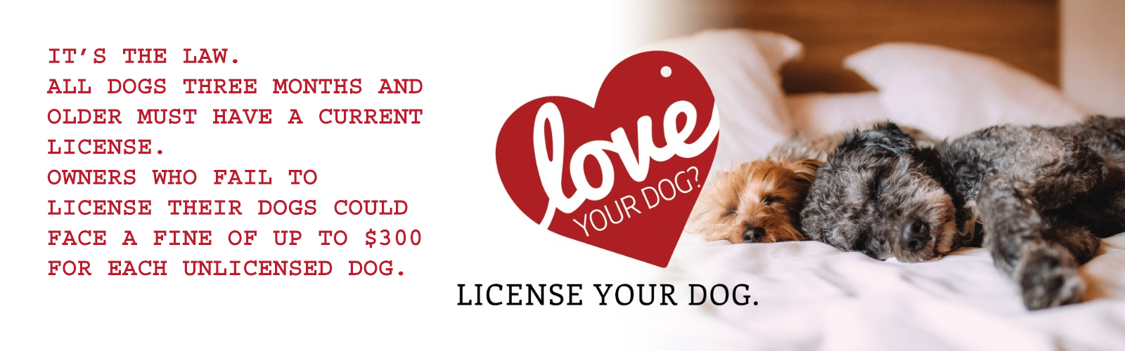 It's the law. All dogs three months and older must have a current license. Owners who fail to license their dogs could face a fine of up to $300 for each unlicensed dog.